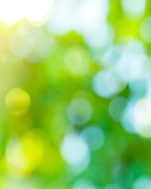 organic_lawn_care
